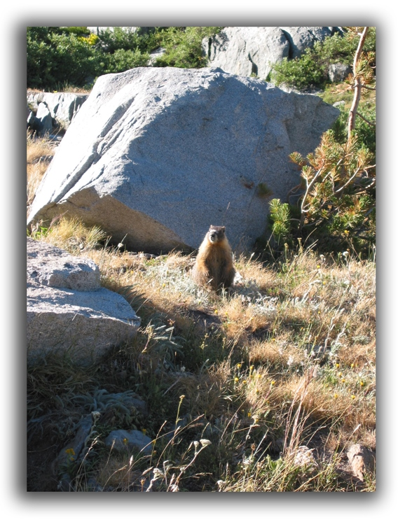 groundhog raleigh removal critter control