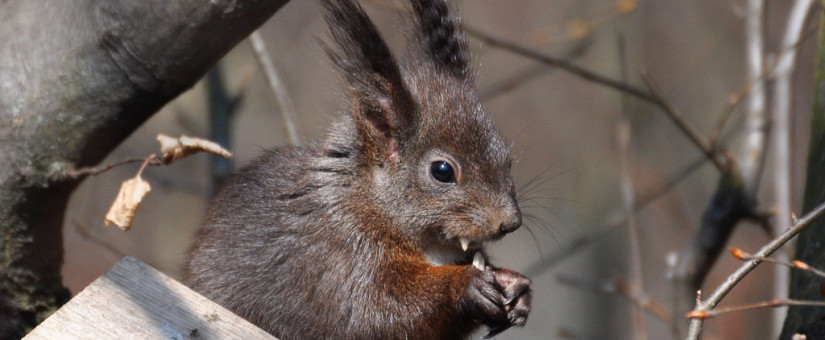 Vampire Squirrels And Other Scary Squirrel Stories