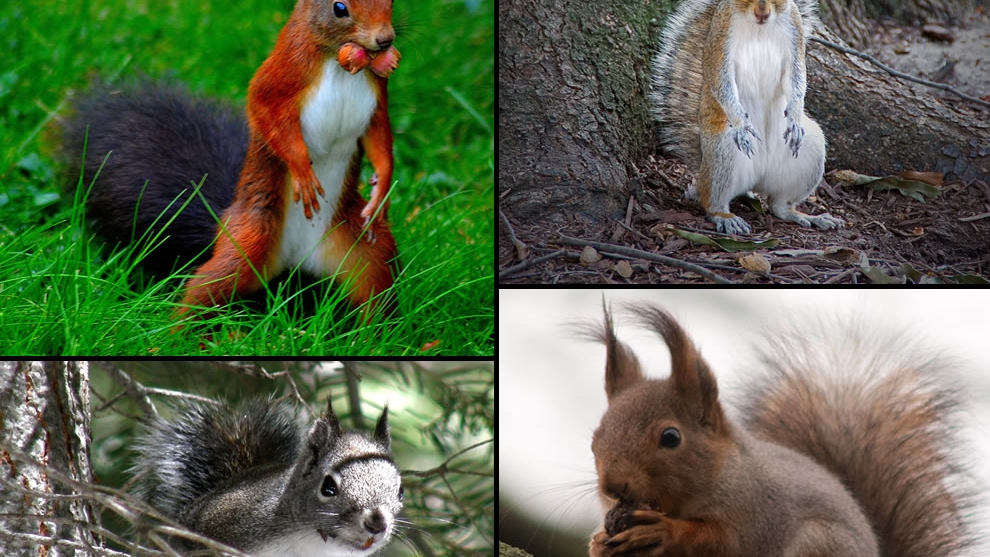 Squirrels In Nc Come In All Shapes And Sizes Critter