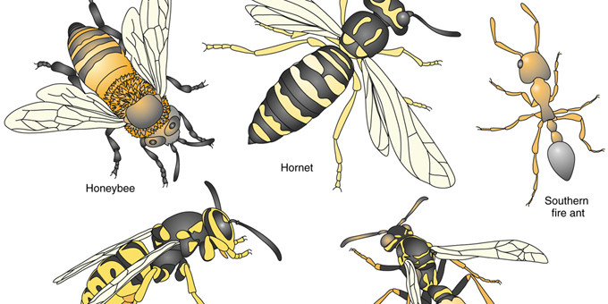 are those hornets wasps bees or yellow jackets critter control