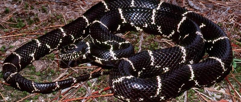 N Snakes It's Snake Season in N...